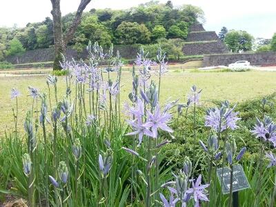 金沢から帰りまして_d0087572_8304698.jpg