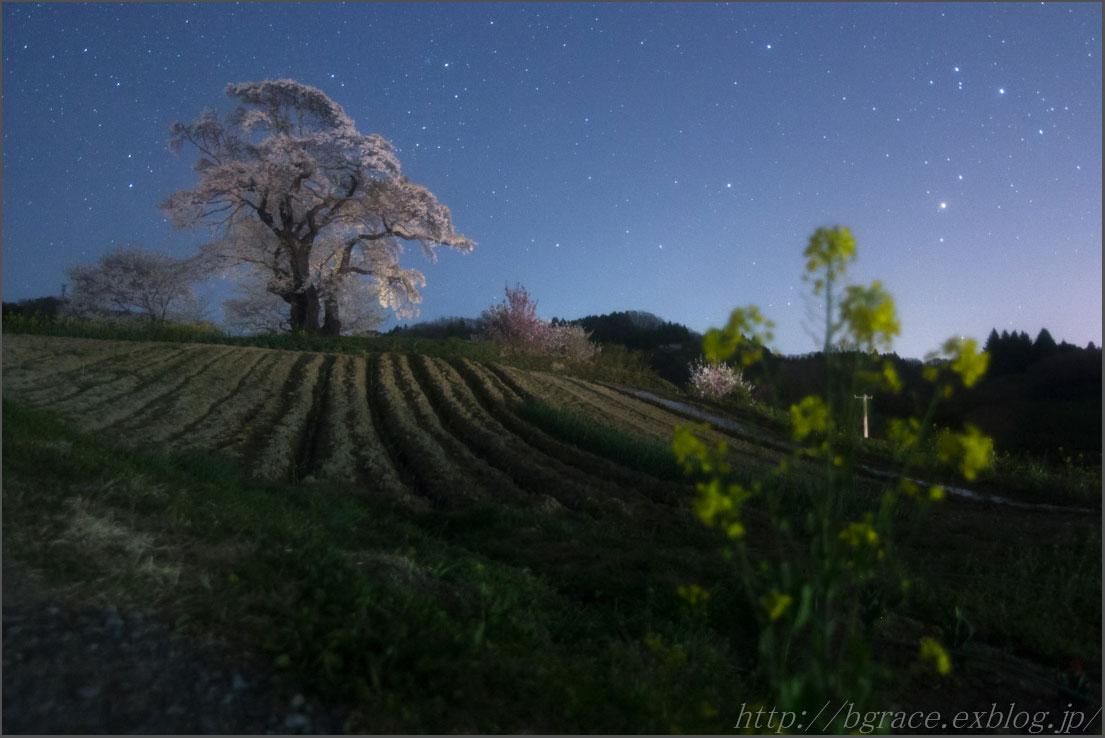 大桜 2日目_b0191074_2315297.jpg