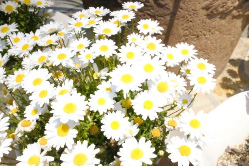 楽器とお花。_e0067283_0314316.jpg