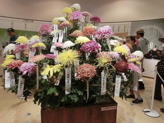 100種類の菊が1本の台木から同時に満開!  浜名湖花博2014「徳川園芸館」_f0141310_7185219.jpg