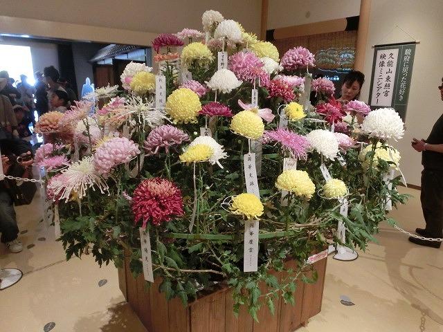 100種類の菊が1本の台木から同時に満開!  浜名湖花博2014「徳川園芸館」_f0141310_7191389.jpg