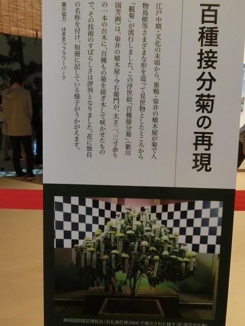 100種類の菊が1本の台木から同時に満開!  浜名湖花博2014「徳川園芸館」_f0141310_719567.jpg