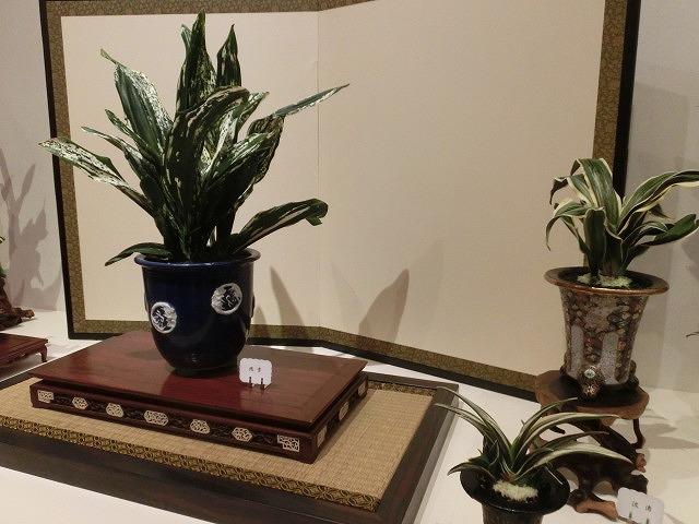 100種類の菊が1本の台木から同時に満開!  浜名湖花博2014「徳川園芸館」_f0141310_721286.jpg