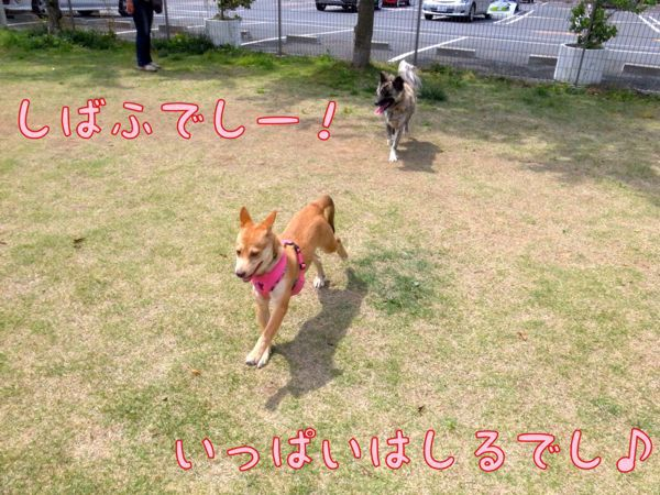 f0329311_20395560.jpg