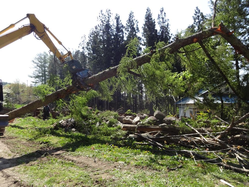 間伐伐採開始_c0111229_19431464.jpg