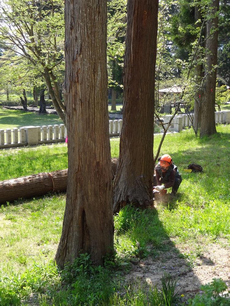 間伐伐採開始_c0111229_19434325.jpg