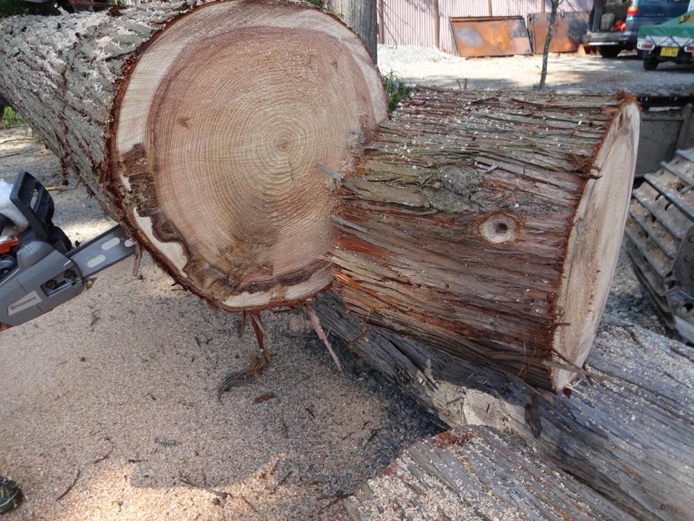 間伐伐採開始_c0111229_19441418.jpg