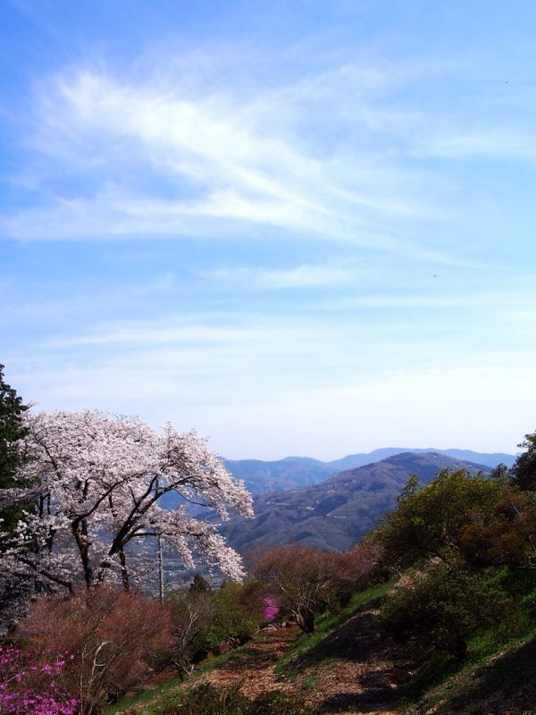 お花見ハイク in 長瀞!_b0133032_22522117.jpg