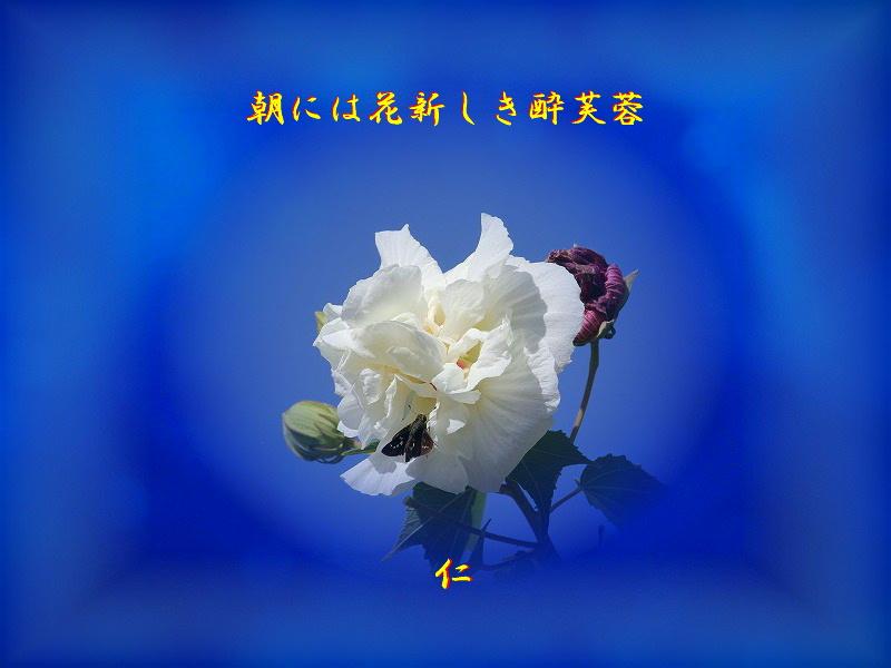 e0017651_1736093.jpg