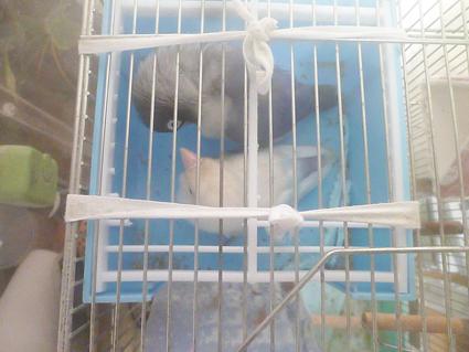 小鳥をつくる_e0147757_00062188.jpg