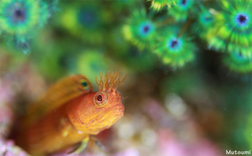 魚もウミウシも...☆みなべ・田辺_e0158261_5171877.jpg