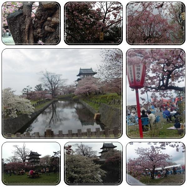 松前城・五稜郭の桜_b0236665_20292795.jpg