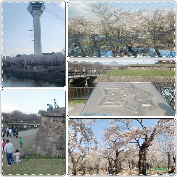 松前城・五稜郭の桜_b0236665_20511020.jpg