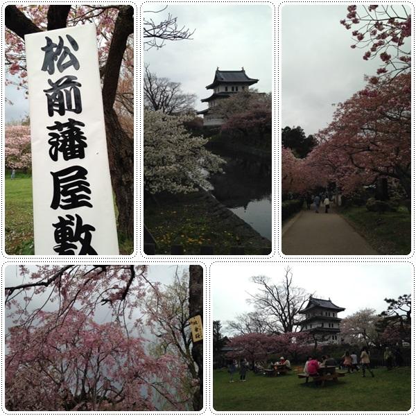 松前城・五稜郭の桜_b0236665_953177.jpg
