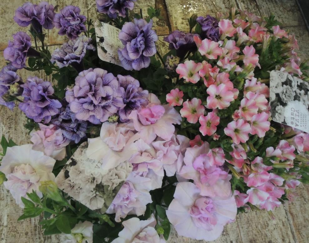 母の日・・・・・とびっきりのお花を贈りましょう!!_b0137969_1113232.jpg