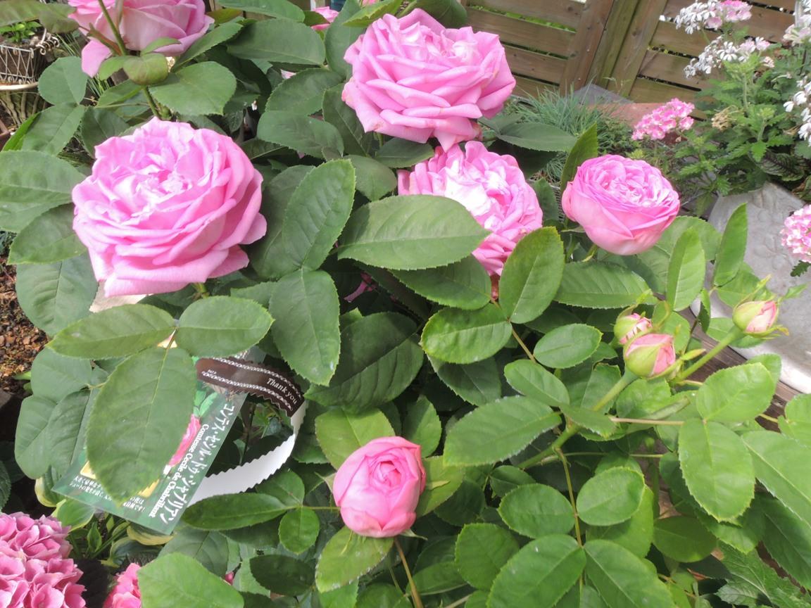 母の日・・・・・とびっきりのお花を贈りましょう!!_b0137969_1118143.jpg