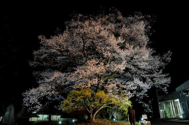 夜桜_d0172270_16284214.jpg