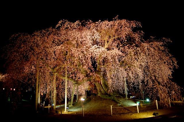 夜桜_d0172270_1628453.jpg