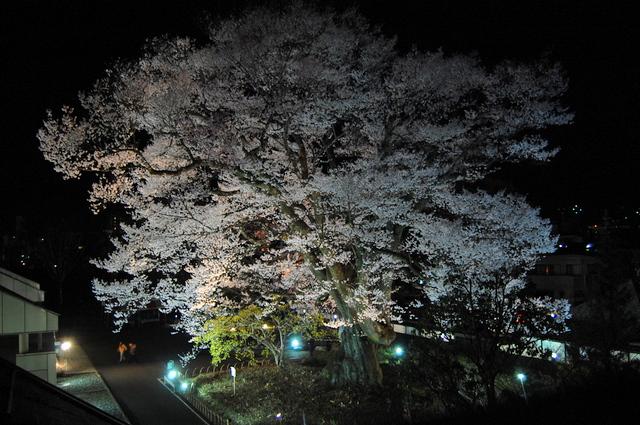 夜桜_d0172270_16291718.jpg