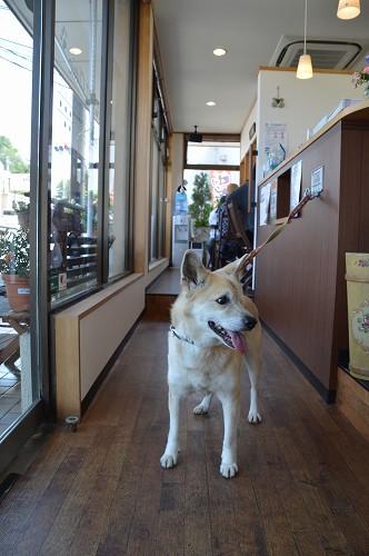 狂犬病予防注射 2014_c0124100_18592657.jpg