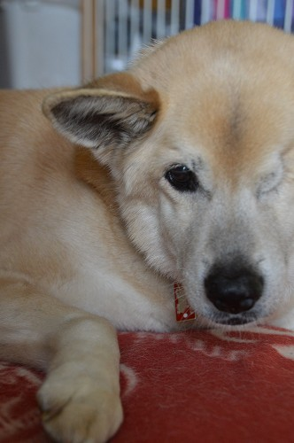 狂犬病予防注射 2014_c0124100_18595428.jpg