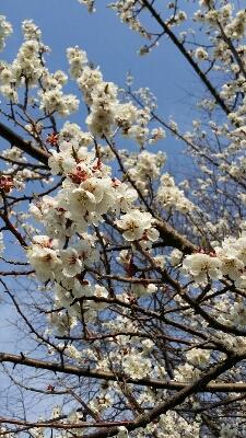 春。_a0164408_1753434.jpg