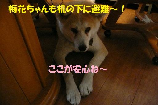 f0121712_16175337.jpg