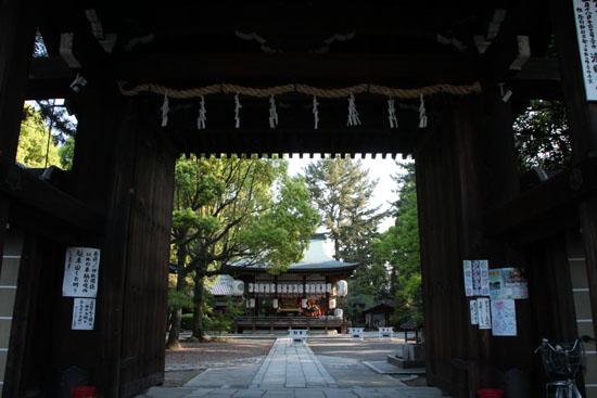 御霊神社 イチハツ満開_e0048413_19575721.jpg