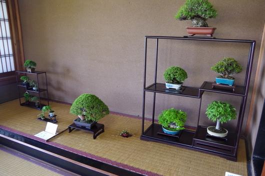 5/2(金)~4(日)湘南小品盆栽展 終了しました_c0110117_14474880.jpg