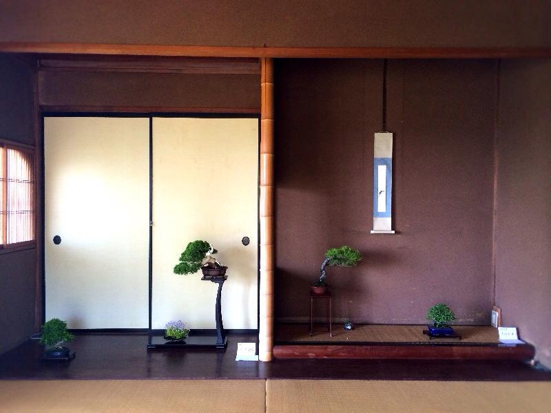 5/2(金)~4(日)湘南小品盆栽展 終了しました_c0110117_1453075.jpg