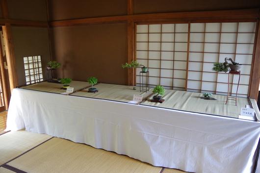 5/2(金)~4(日)湘南小品盆栽展 終了しました_c0110117_14535771.jpg