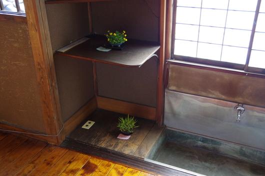 5/2(金)~4(日)湘南小品盆栽展 終了しました_c0110117_14582396.jpg