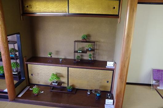5/2(金)~4(日)湘南小品盆栽展 終了しました_c0110117_151439.jpg