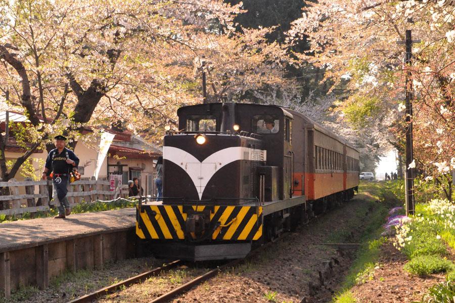 桜舞う芦野公園にて_e0162117_19182391.jpg