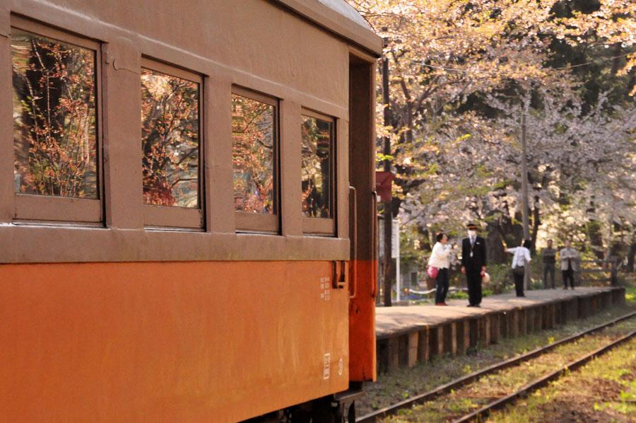 桜舞う芦野公園にて_e0162117_19185393.jpg
