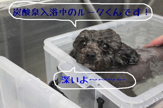 b0130018_10144322.jpg