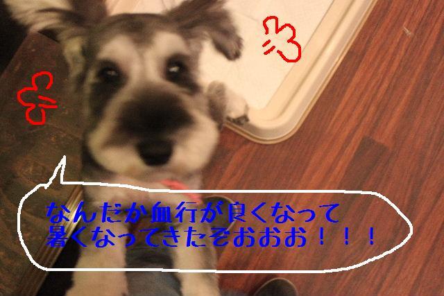 b0130018_15283511.jpg