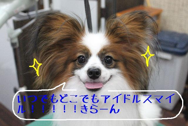b0130018_15304355.jpg