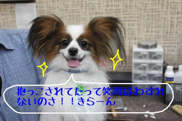 b0130018_15305165.jpg