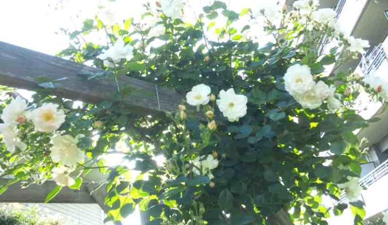 庭もよう_d0085018_18233174.jpg