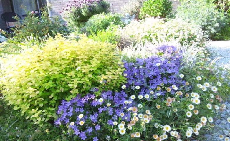 庭もよう_d0085018_1825427.jpg