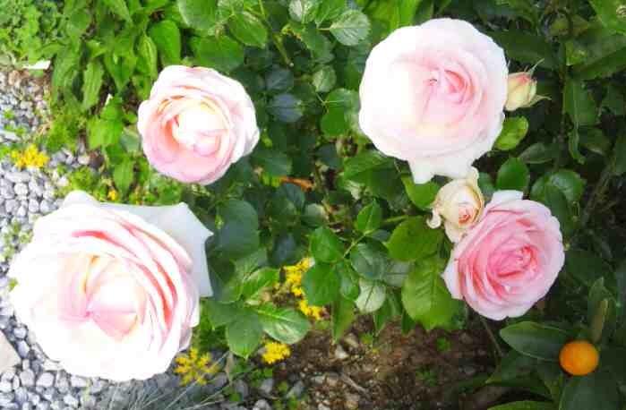 庭もよう_d0085018_18313671.jpg