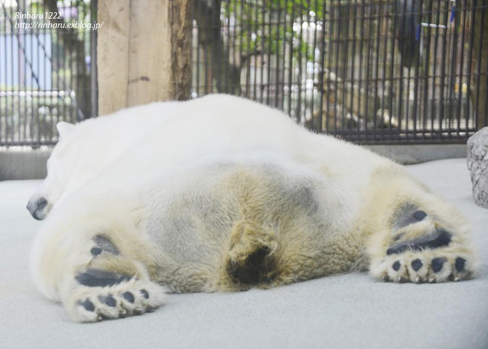 2014.1.11 とべ動物園☆ホッキョクグマのピース【Polar bear】_f0250322_23211593.jpg
