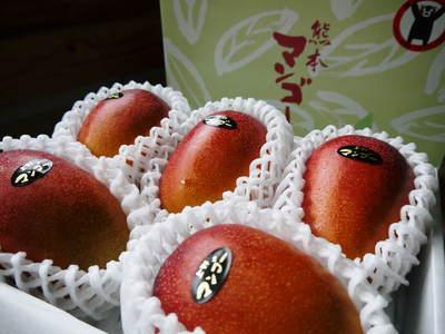 完熟アップルマンゴー 着果の様子を現地取材! まもなく始まる匠の摘果作業!_a0254656_18303486.jpg