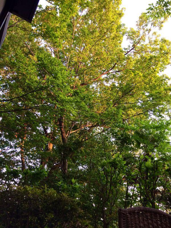緑に囲まれて☆_c0151965_13123331.jpg
