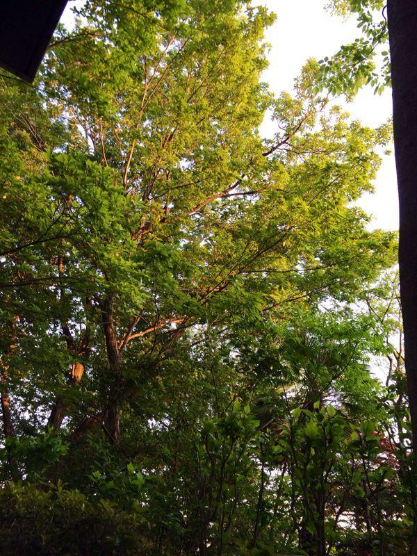 緑に囲まれて☆_c0151965_1312354.jpg