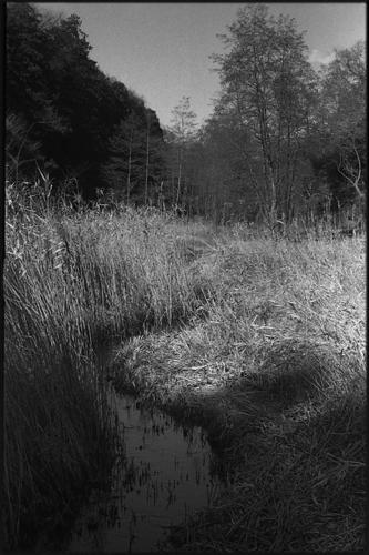 Kodak フィルム値上げ、7/1から_a0281778_2218431.jpg
