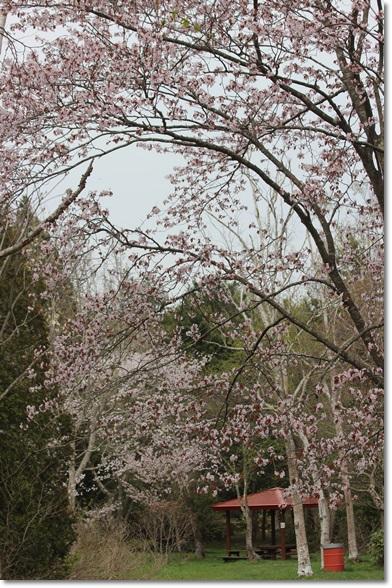 野幌大沢から登満別園地へ_f0146493_22205643.jpg
