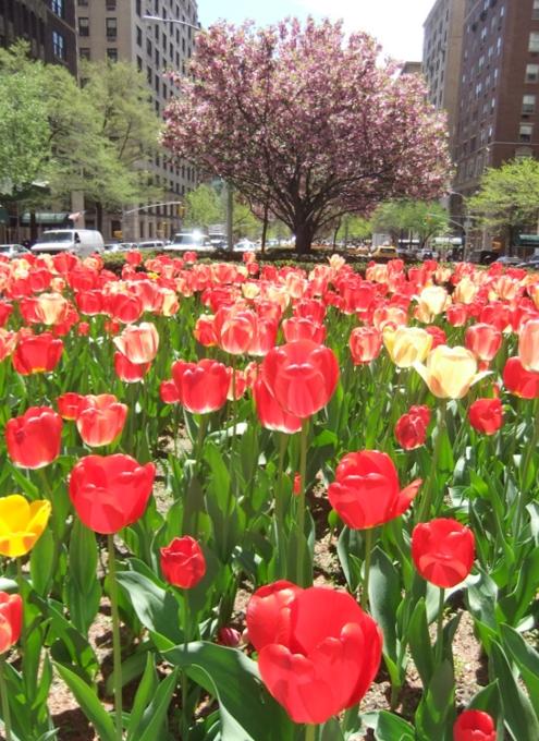 春のニューヨークのパーク・アベニュー_b0007805_1323289.jpg