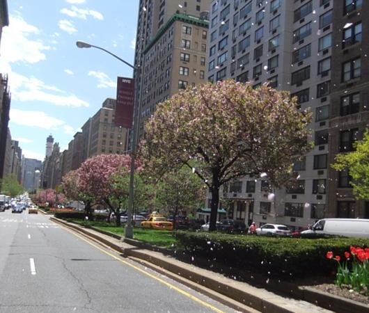 春のニューヨークのパーク・アベニュー_b0007805_1333243.jpg